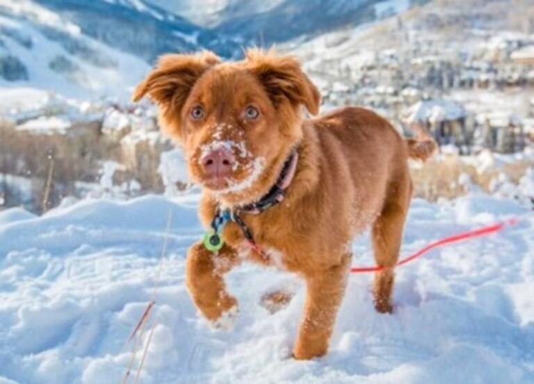 Dog friendly, pet friendly, lodging in Beaver Creek